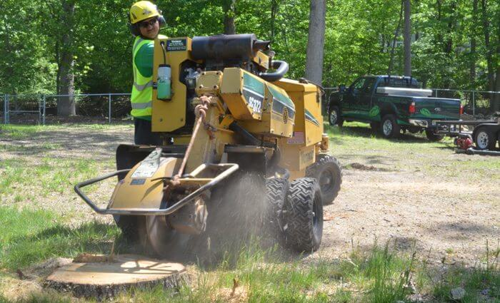 Characteristics You Need To Know To FInd A Reliable Stump Grinding Expert